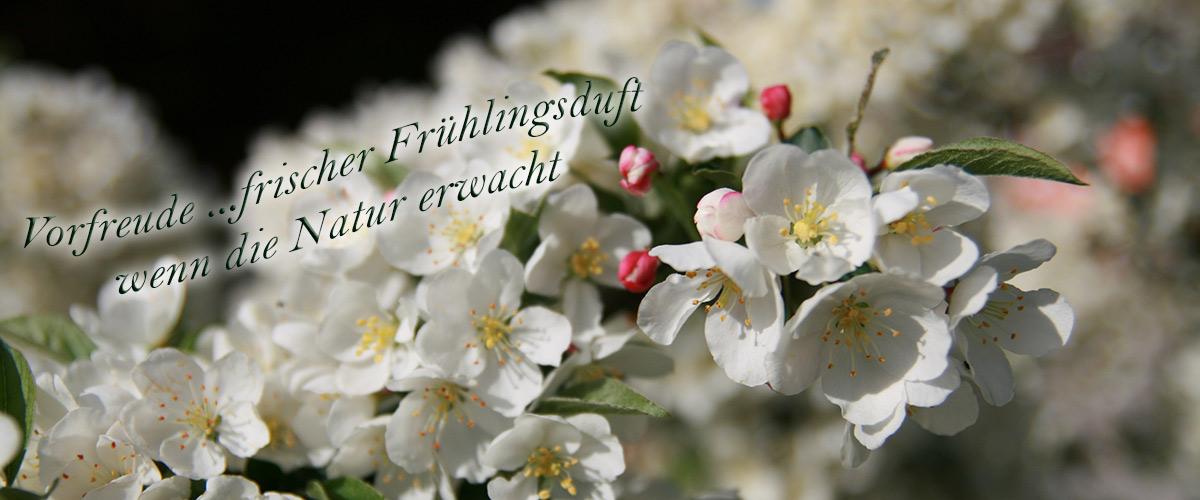 Frühlingsmotiv–(1)