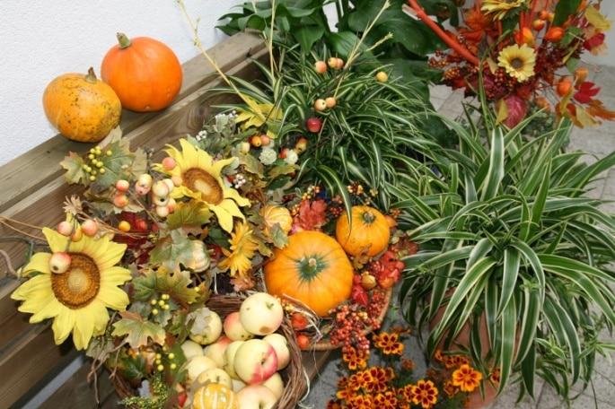 Herbstzeit in der SEEHÖHE