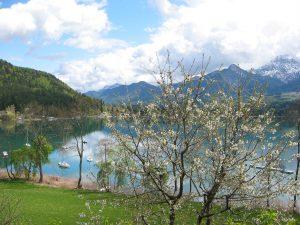 Frühling am See läßt grüßen