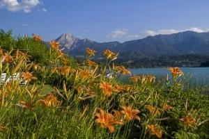 die Lilien mit Mittagskogel und ein wenig vom Faaker See