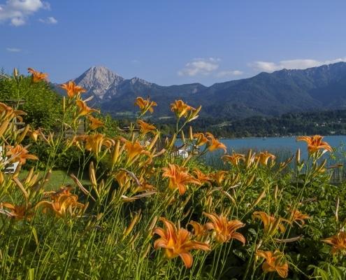 Am privaten Badestrand, Lilien mit Mittagskogel und ein wenig vom Faaker See